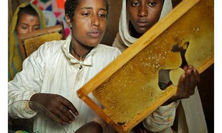 Hurra – Ich habe einen Bienenstock