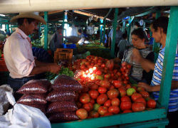 Vegetable vendors in Tegucigalpa