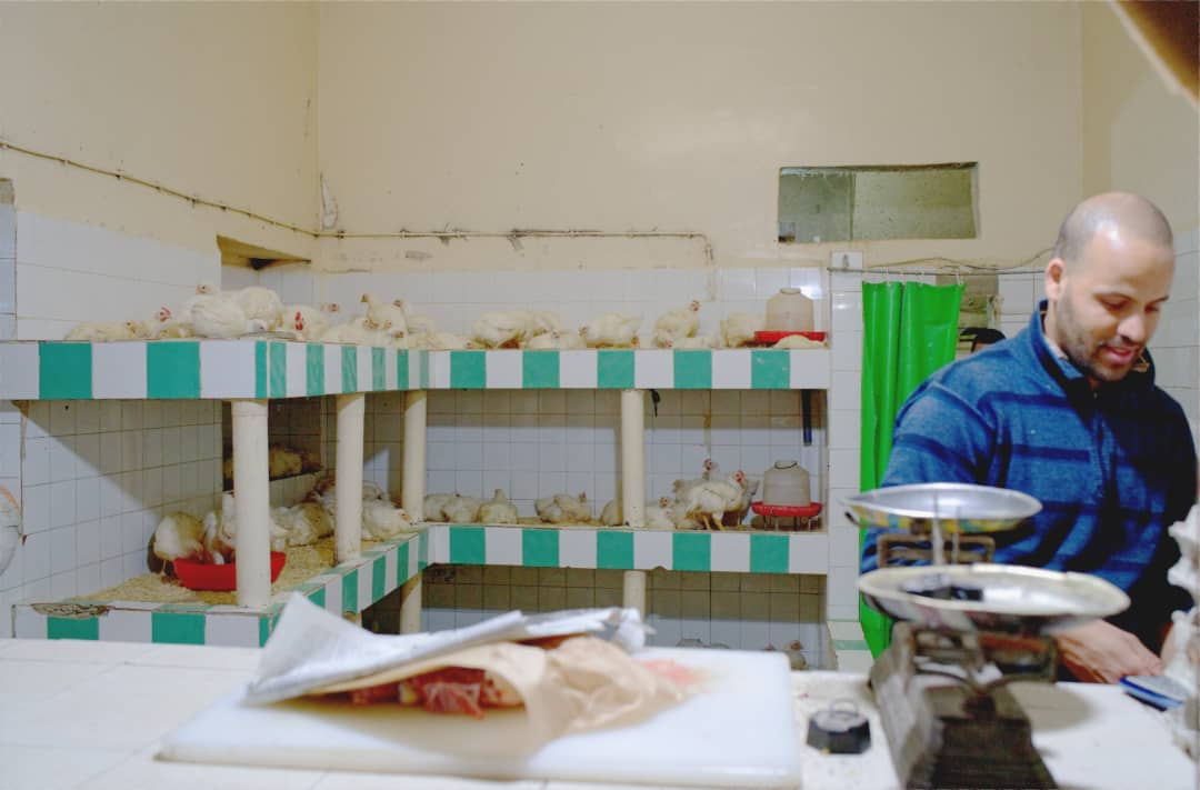 Poultry store with live stock in Tarnoudant