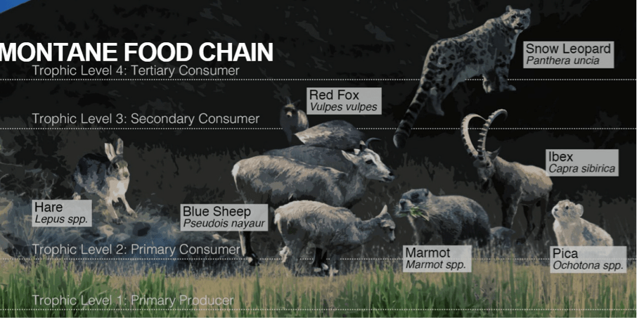 montane food chain