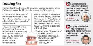 Cattle-graphic