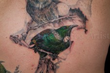 Colour-Tui-Realism-Tattoo