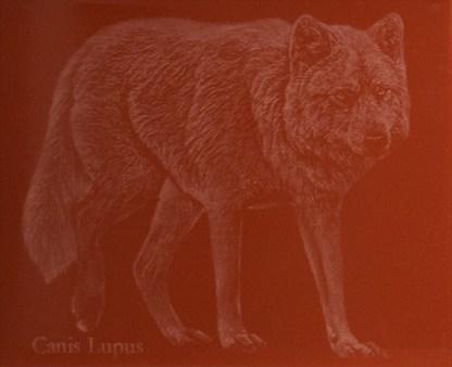 Susi Canis Lupus Punainen