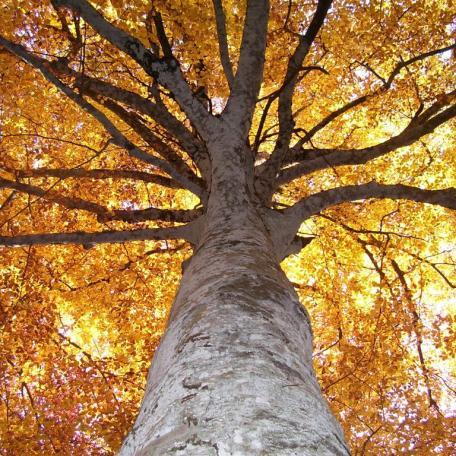 ottobre-2008-castellazzara-066