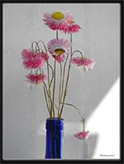 florseca
