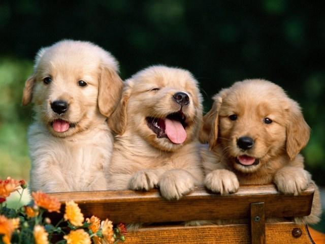 cachorritos