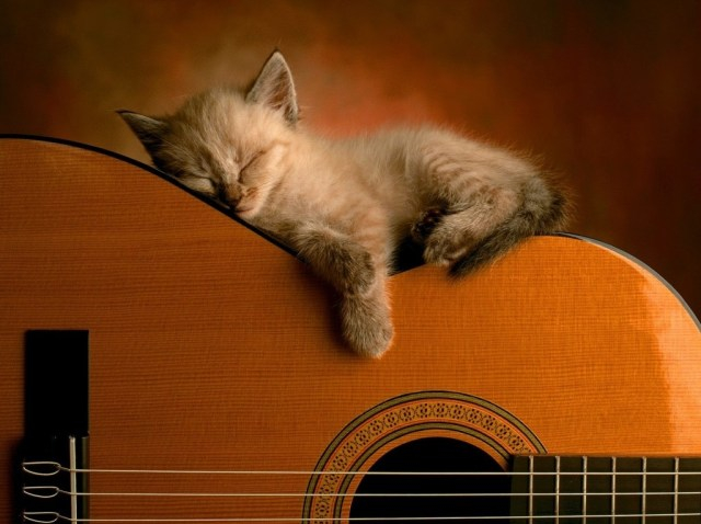 gatito_guitarra