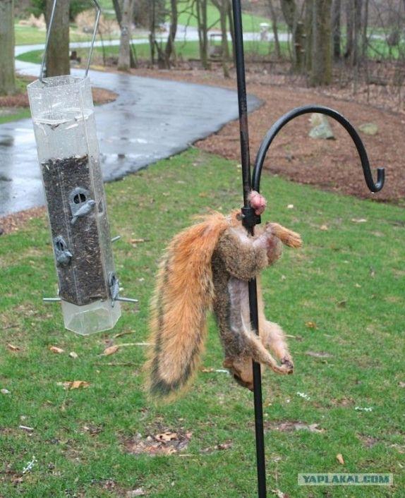 Squirrel_02