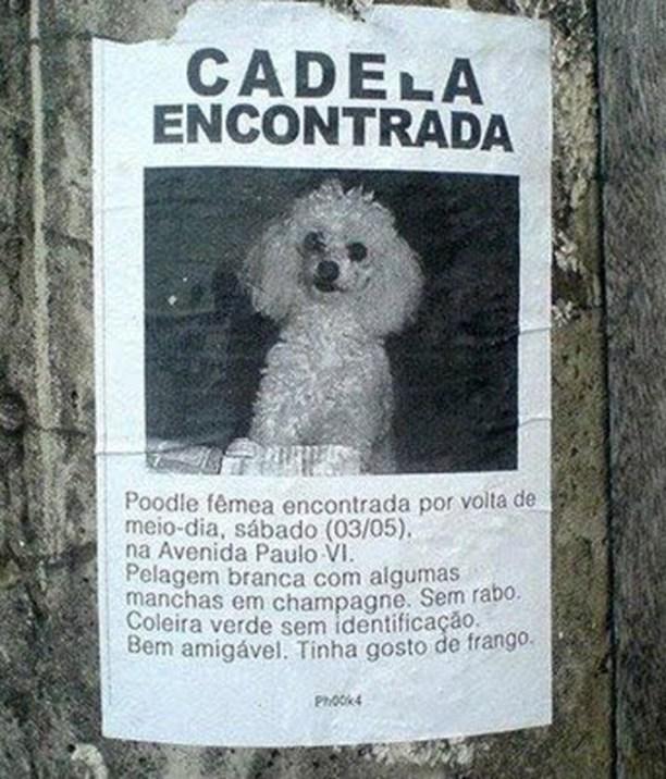 cadela-encontrada