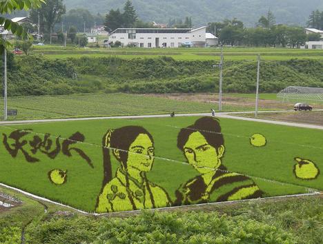 plantações de arroz no Japão 07