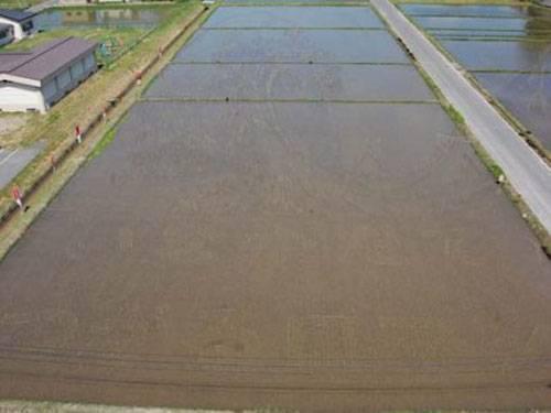 plantações de arroz no Japão 15