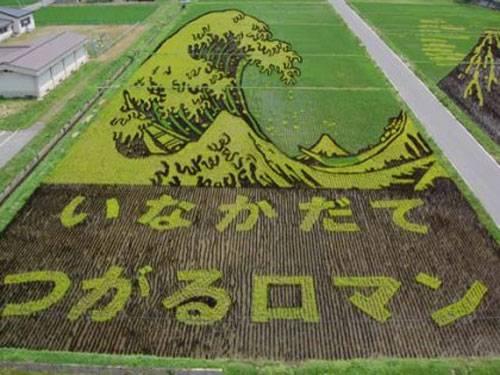 plantações de arroz no Japão 19