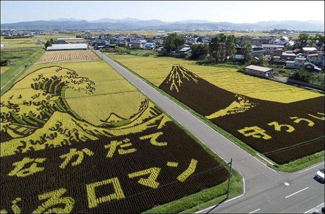 plantações de arroz no Japão 20