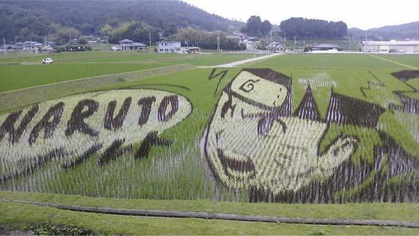 plantações de arroz no Japão 24