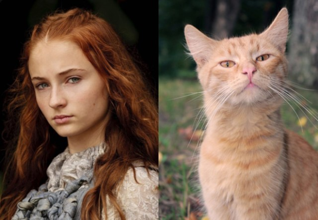 game-of-cats-10