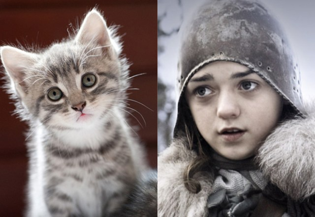 game-of-cats-11
