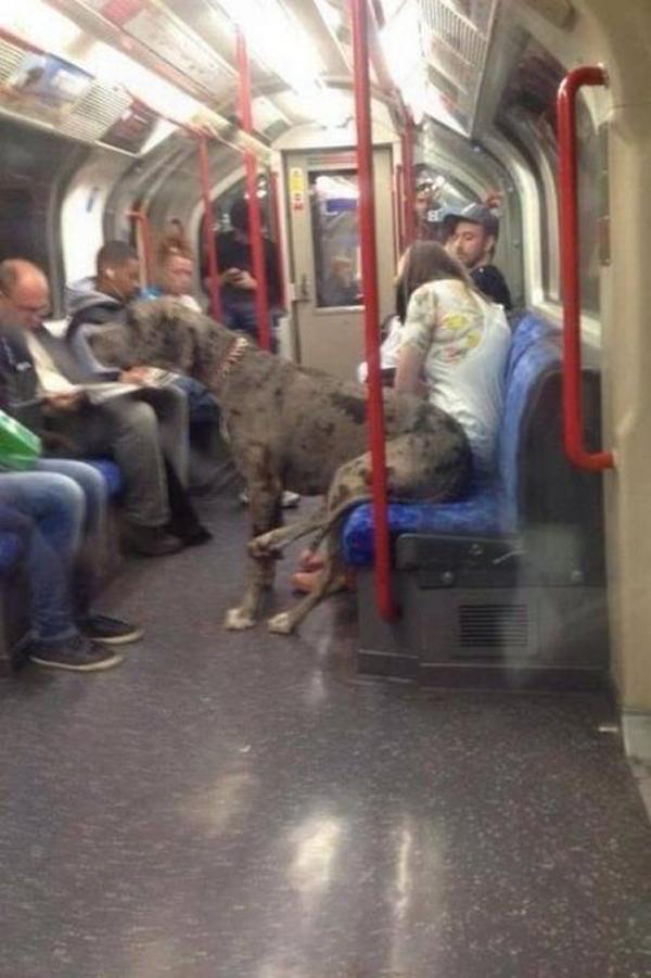 cachorro_gigante_metrô_Londres