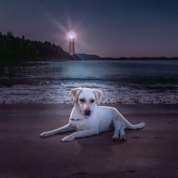 cachorros-ensaio-abrigo-10