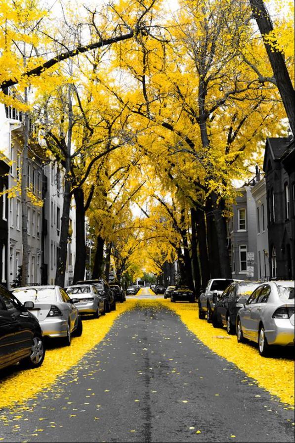 ruas-cobertas-flores-arvores-8