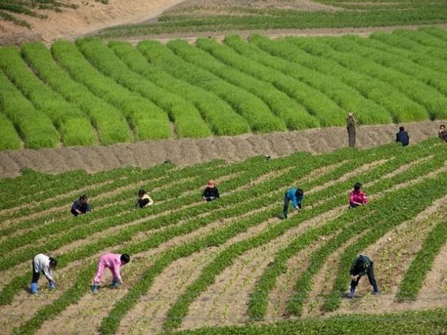 fotos proibidas Coreia do Norte 10