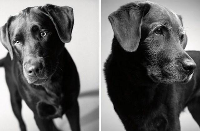 envelhecimento-de-cães-1