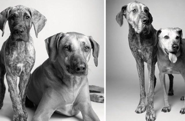 envelhecimento-de-cães-6