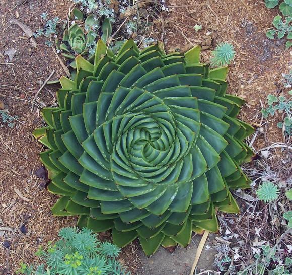 plantas-geométricas-02