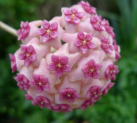 plantas-geométricas-07