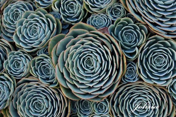 plantas-geométricas-12