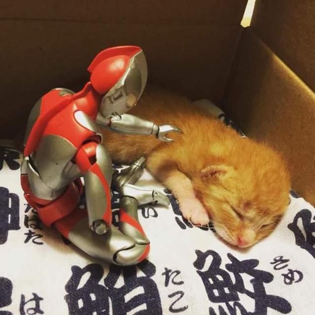 gato e ultraman 02