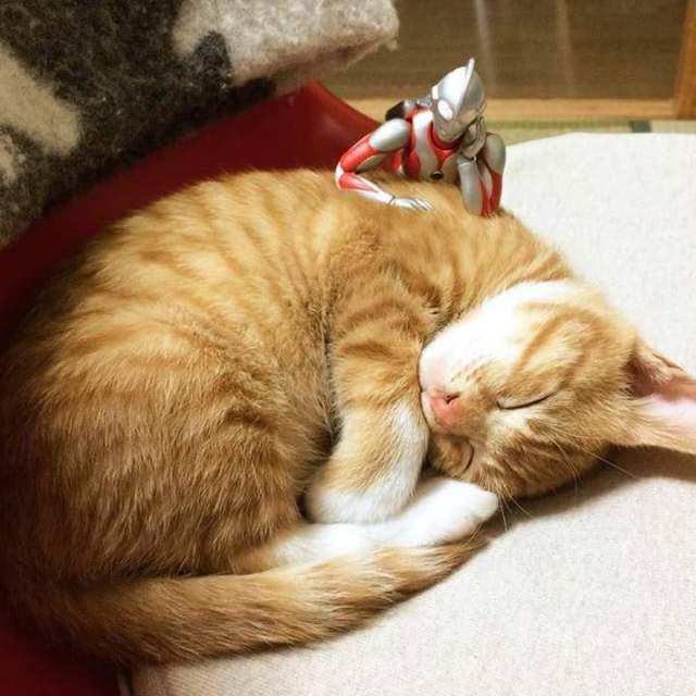gato e ultraman 07