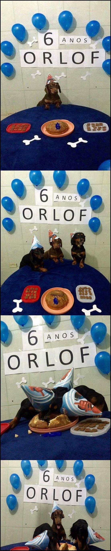 festa de aniversário de cachorro