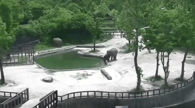 Tem Na Web - Dois elefantes salvam filhote de se afogar em zoológico