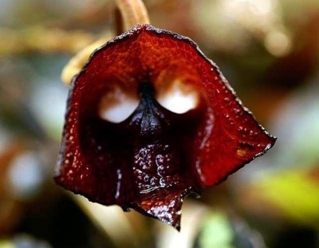 Orquídeas diferentes