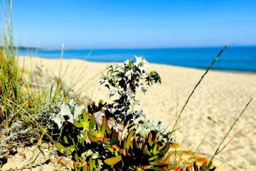 Sardegna, è ora di decidere quale futuro vuoi essere.