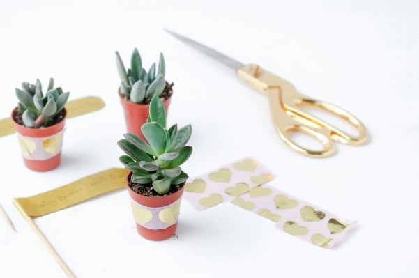 valentines day succulents-1045