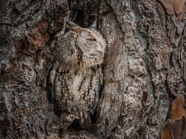 Camouflaged-Owls-Within-Trees-9