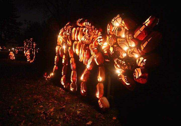"""The Great Jack O'Lantern Blaze"""