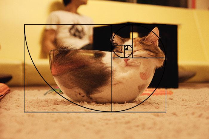 gatos-proporcao-aurea (13)