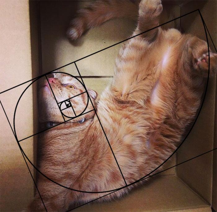 gatos-proporcao-aurea (14)