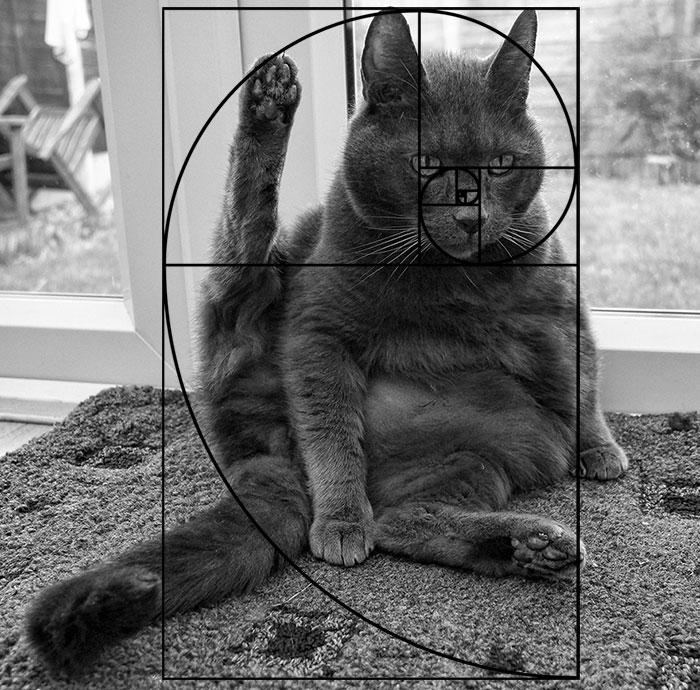 gatos-proporcao-aurea (3)