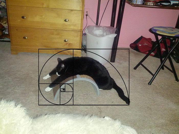 gatos-proporcao-aurea (4)