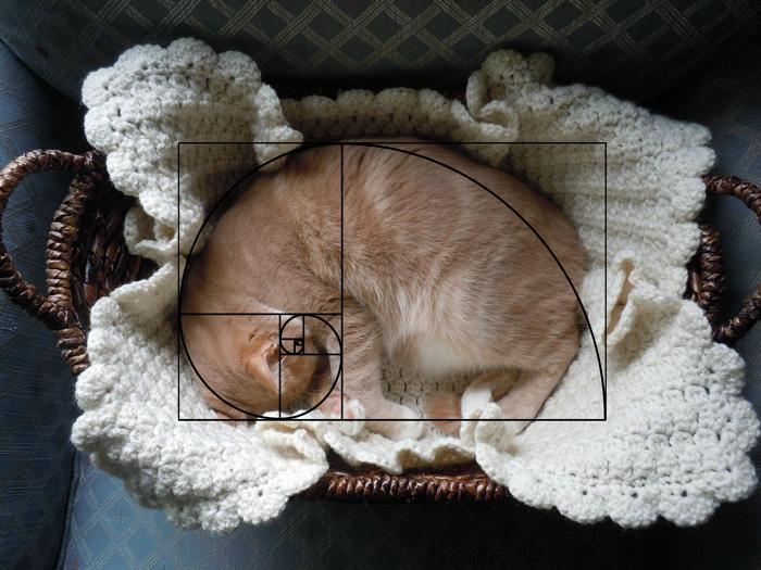 gatos-proporcao-aurea (8)
