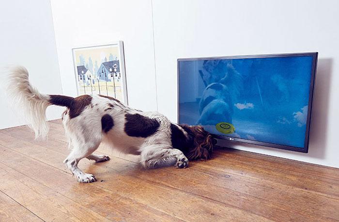 exposicao-arte-cachorros (4)