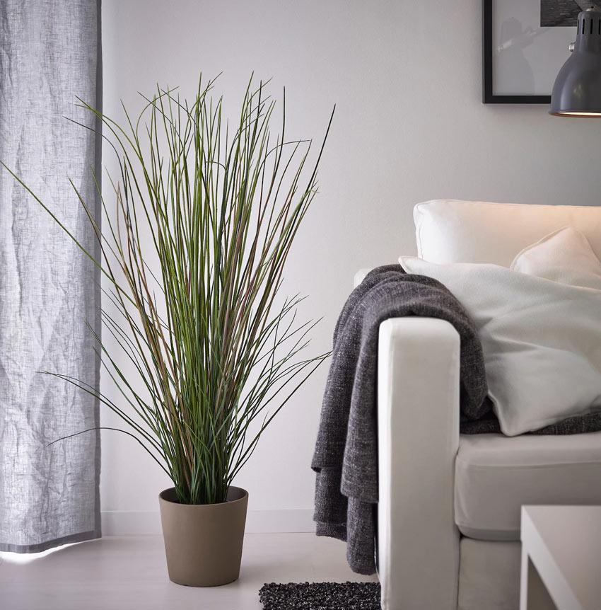 plantes dans le salon