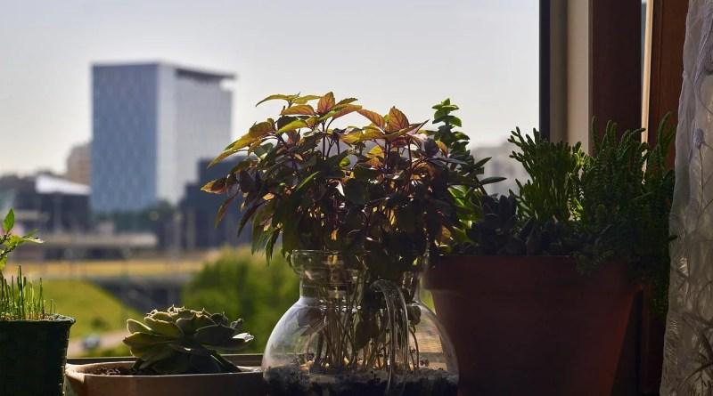 Succulents Basil Garden In Pot  - CatKosianok / Pixabay