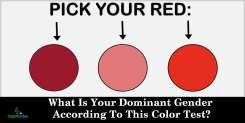 What Is Your Dominant Gender According To This Color Test?
