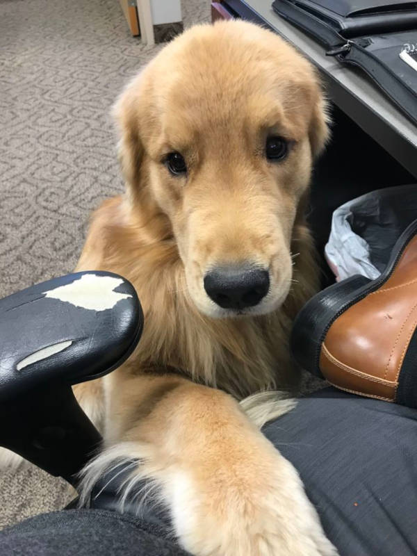 17. Who wouldn't want to work where a retriever visits you