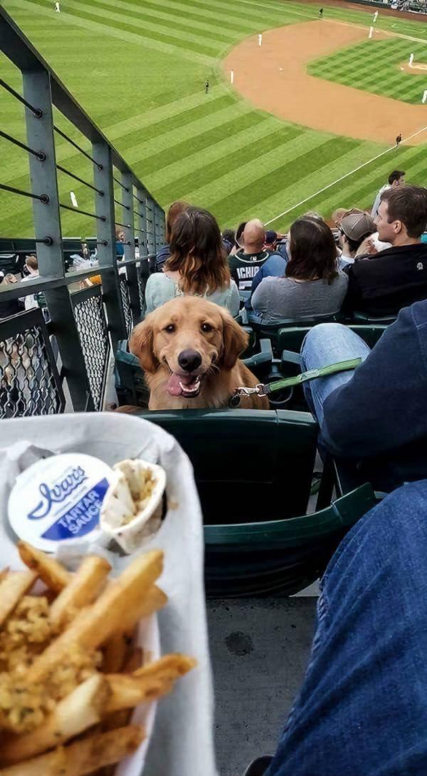 20. Spare him some fries, for God's sake!