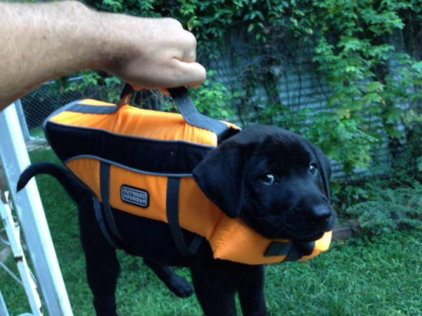 4. Isn't this cute This pup is so tiny that he can fit in a tiny bag. And it looks like he is proud of that!
